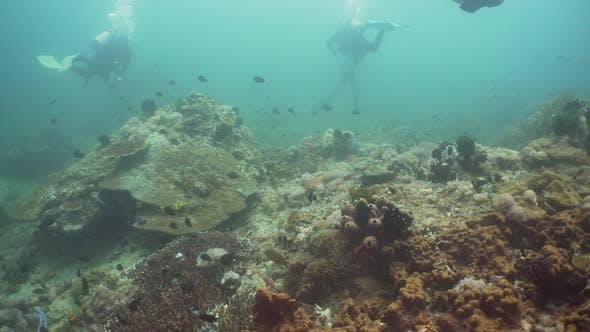 Cover Image for Scuba Divers Underwater. Philippines, Mindoro