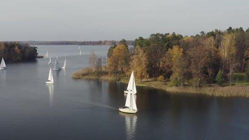 Sailing Boats Regatta