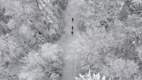 3 People Walking Beautiful Snow Forest in Winter Aerial View