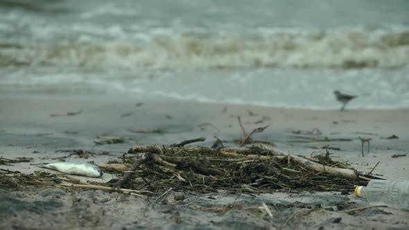 Thumbnail for Dead Fish on Seashore, Negative Impact of Water Pollution and Waste Resources