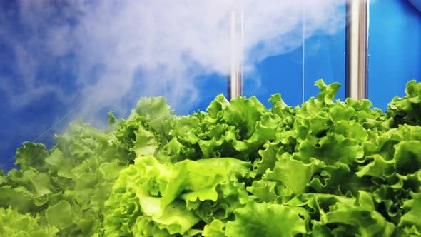 Cover Image for Cooling and Moisturizing Plant for Fruits and Vegetables