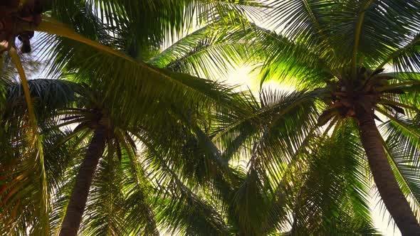 Thumbnail for the Sun Shines Through the Foliage