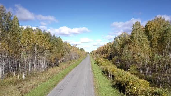 Thumbnail for Close Flight To Empty Road Stretching Among Birch Forests