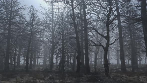 Thumbnail for Looped Animation of Flying Through a Scary Forest