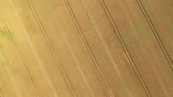 Thumbnail for Aerial Zoom Wheat Field Background
