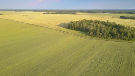 Thumbnail for Bird Eye Flight Groves Wheat Fields and Forest on Horizon