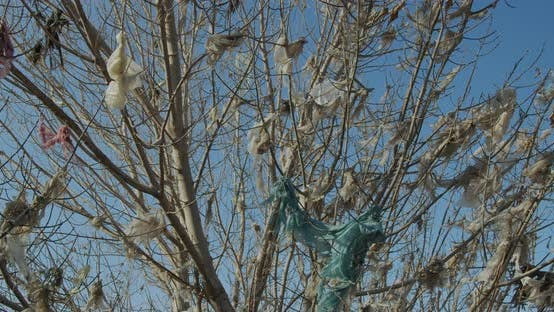 Cover Image for Plastic Bags Hanging on Tree Instead of Leaves. Plastic Pollution.