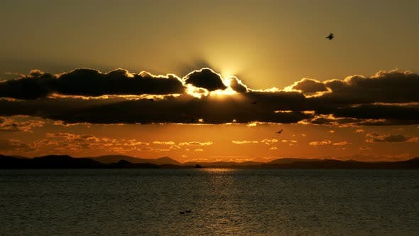 Thumbnail for Birds Flying In Sunset And Sea
