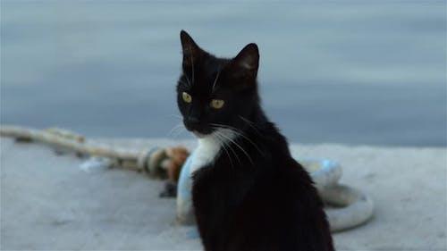 Tame Schwarz Weiß Niedliche Katze In Marina