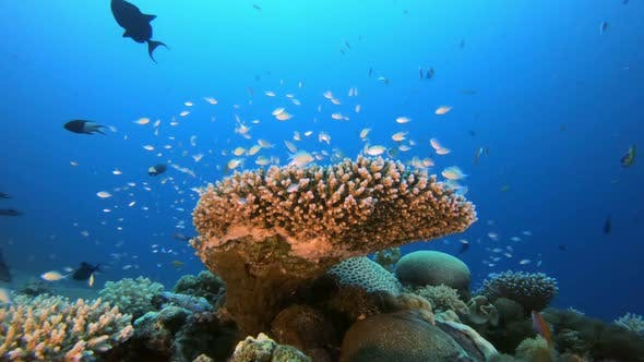 Cover Image for Coral Garden Seascape