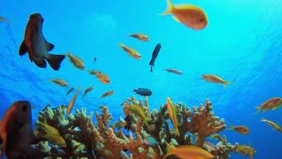 Orange Fish Blue Sea