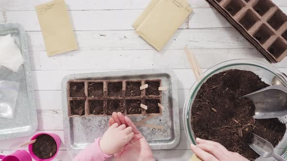 Thumbnail for Flat lay. Little girl helping to plant herb seeds into small containers for a homeschool project.
