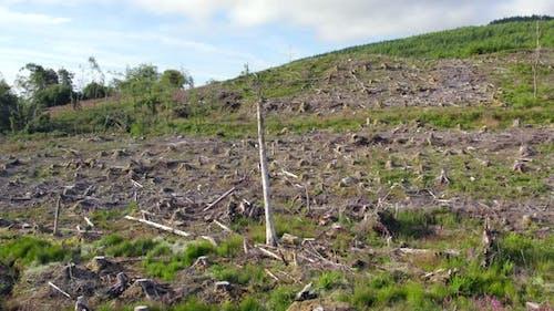 Agroforestry Following Deforestation of a Woodland Plantation Habitat Flyover