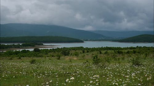 daisy flowers in a green field with lake and mountains