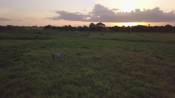 Thumbnail for Horse Sunset