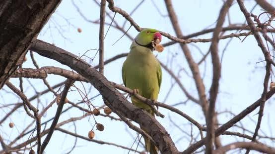 Un perroquet vert est assis sur une branche mangeant quelque chose