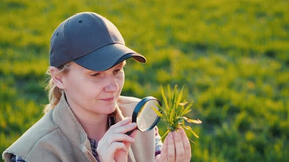 Thumbnail for Portrait of a Young Woman Agronomist Studying Wheat Shoots Through a Magnifying Glass