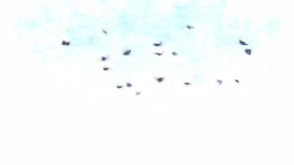 Butterflies Stop Motion