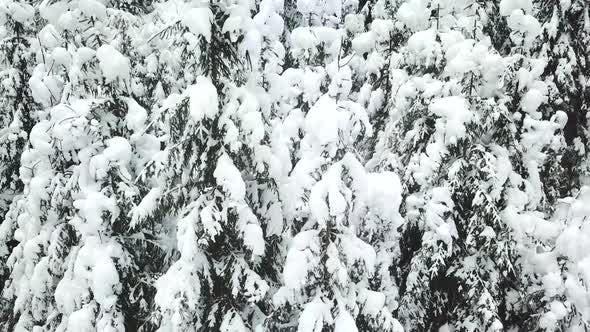 Winter Carpatians nature, aerial view realtime snowfall