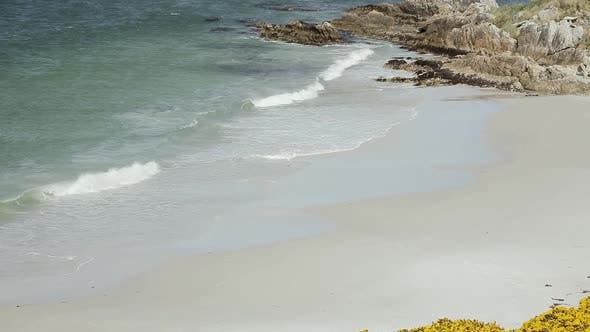 Thumbnail for Penguin walking at an Empty Beach during the Coronavirus Global Pandemic.