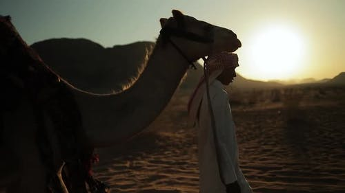 Arab bedouin man walks with Camel In the Desert sunset, Wadi-Rum, Jordan.