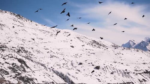A Flock of Birds Flying Free in the Sky with the Snow Covered Mountains in the Background in Spiti