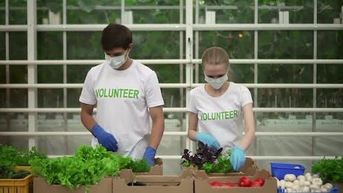 Vorderansicht von Freiwilligen packen frisches Gemüse und arbeiten zusammen in Warehouse Spbd