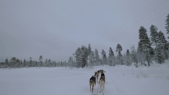 Thumbnail for Traveling in Winter Forest with Sled Dogs