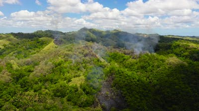 Forest Fire in the Rainforest