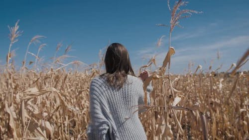 Young woman walks in the cornfields
