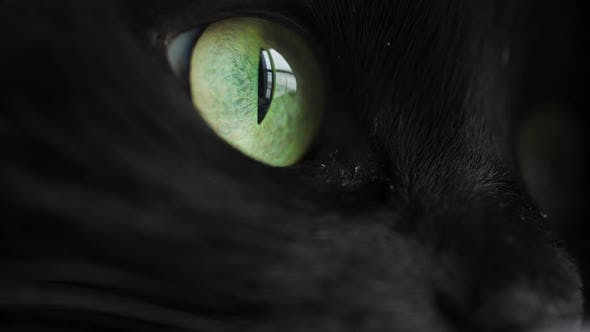 Muzzle of a Black Cat in Profile with Green Eyes Extreme Close Up