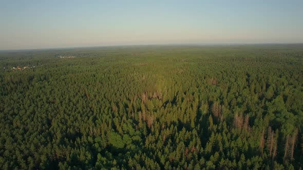 Cover Image for Aerial Flight Above the Huge Green Forest, Russia