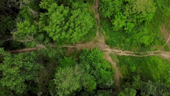 Thumbnail for Aerial Top Down View of Woodland Mysterious Forest Road
