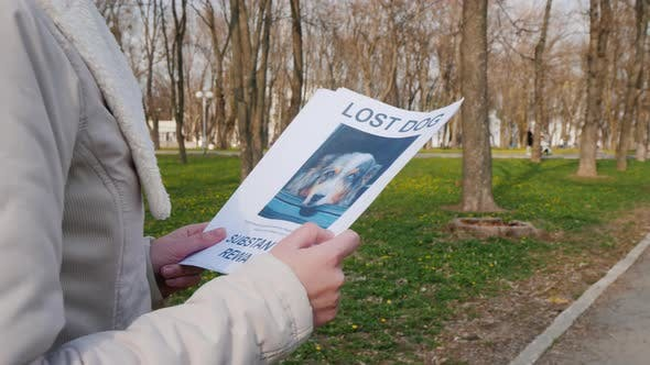 Man Goes Through the Park with a Poster of a Dog Missing