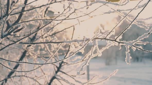 Thin Tree Branches Covered with Hoarfrost in Winter Park
