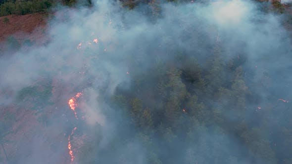 Extinguishing Forest Fire