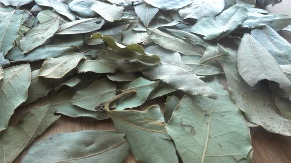 Thumbnail for Lots of Laurel Leaves Used for Cooking
