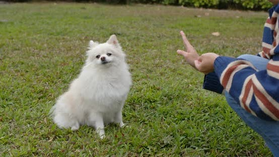 Thumbnail for Training Pomeranian at park