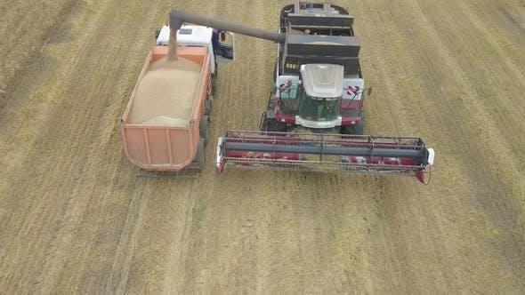 Thumbnail for Der Mähdrescher wird das Getreide in den Truck entladen