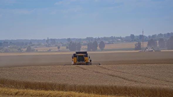 Thumbnail for Summer Wheat Harvesting