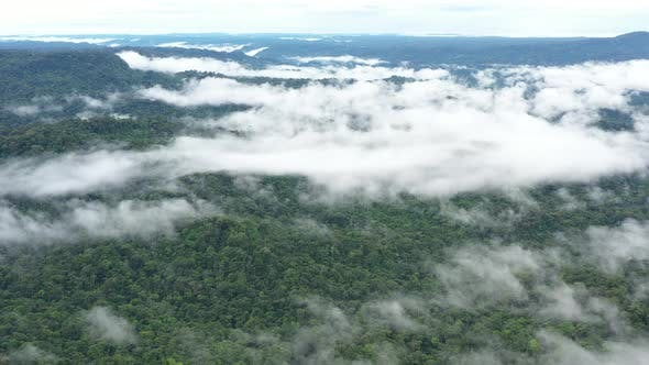 Aerial view over tropical forest with a layer of fog over the tree canopy