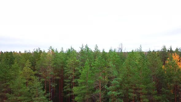 Thumbnail for Herbst Im Wald 22