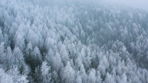 Flight Over a Fabulous Snowcovered Forest on the Slopes of the Mountains