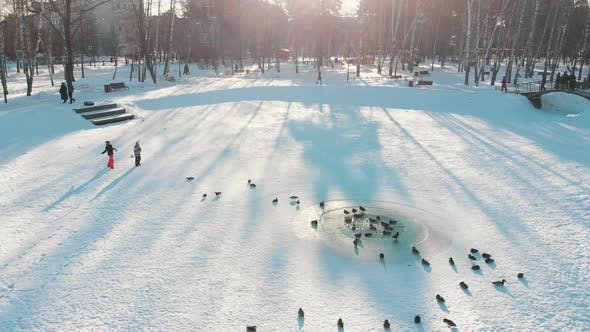 Thumbnail for Russian Winter - Ducks Are Swimming on the Frozen Pond