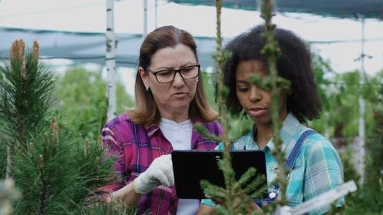 Thumbnail for Two Gardeners Using Tablet in Nursery Garden