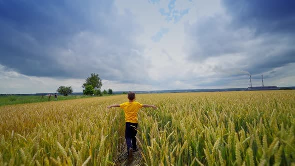 Thumbnail for Cute child running in a wheat golden field on a summer day