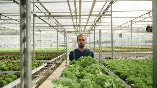 Man Working in a Greenhouse Pushing a Cart