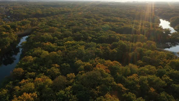 Thumbnail for Autumn Forest Aerial View 3