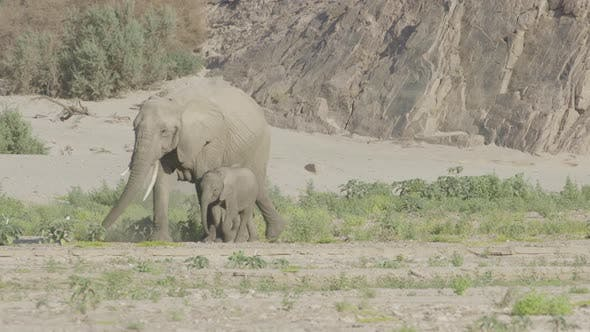 Mother Elephant and Her Calf