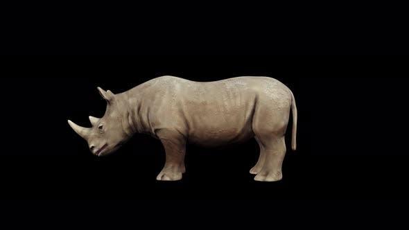 Thumbnail for 4K Rhinoceros Sitting